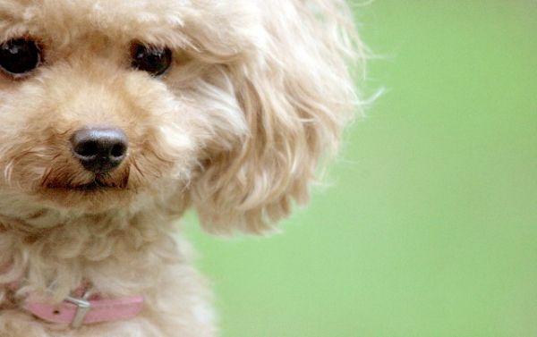 ペット補償特約【可愛い犬・猫を交通事故から守る特約】