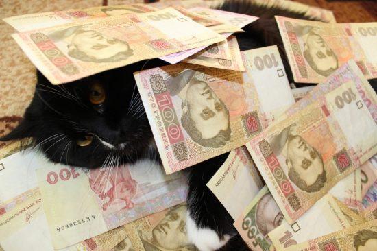 お金と戯れる猫