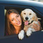 車に乗っているペットと女性