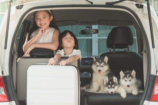 車に乗っている犬と子供