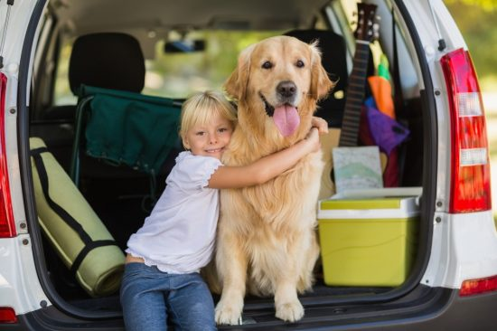 車に積載された物に囲まれている子供と犬